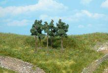 Heki 1152 Scots Pine Trees 6cm
