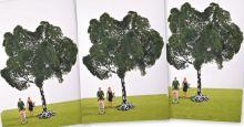 Ash Tree - Multi-Buy