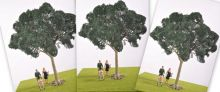 Sycamore Tree - Multi-Buy