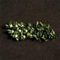 Broccoli and Cauliflowers - N Gauge - 00915