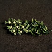 Broccoli and Cauliflowers - N Gauge - 00915 - BACKORDER