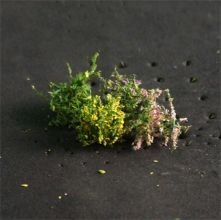 Flower Bushes - N Gauge