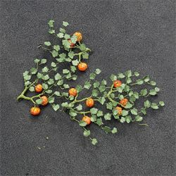 Pumpkins - N Gauge - 00991