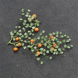 Pumpkins - N Gauge - 00991