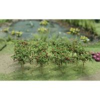 Apple Saplings - 00379
