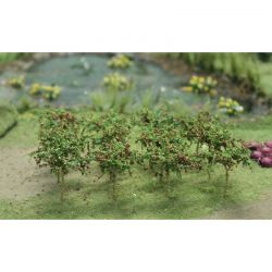 Apple Saplings - 00379 - BACKORDER