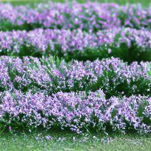 Lavender Field - OO/HO Scale - 00712