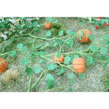 Pumpkins - OO/HO Scale - 00681