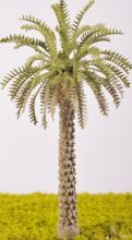 Date Palm Tree - (Click picture for options)