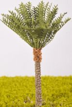 Phoenix Dactylifera (Date Palm) - (Click picture for options)
