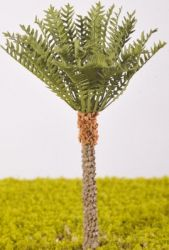 Phoenix Dactylifera (Date Palm) - (Click picture to see prices and options)