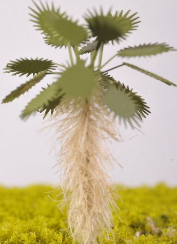 Mediterranean Fan Palm - (Click picture to see prices and options)