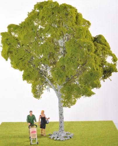 Beech Tree - Faulty Stock!