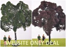 Copper Beech & Ash Tree