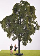 Elm Tree - LAST ONE!
