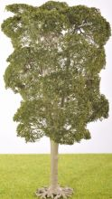 PL1025 - 200mm Deciduous Tree (C5)
