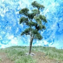 PL1029 - 105mm Tall Deciduous Tree