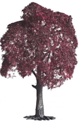 Copper Beech 130mm