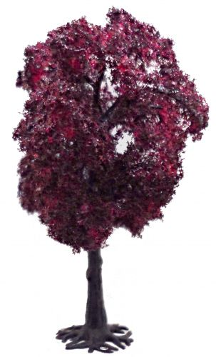 Copper Beech 80mm