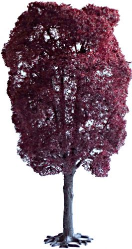 Copper Beech 180mm