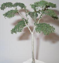 Eucalyptus/ Gum Tree