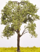 Elm Tree - (Click picture for options)