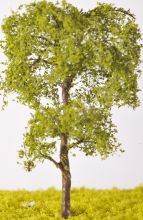 Beech Tree - (Click picture for options)