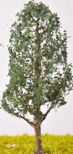 Cedar Tree - (Click picture for options)