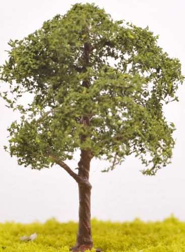 Sycamore Tree - (Click picture for options)