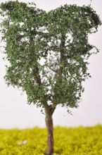 Ash Tree - (Click picture for options)