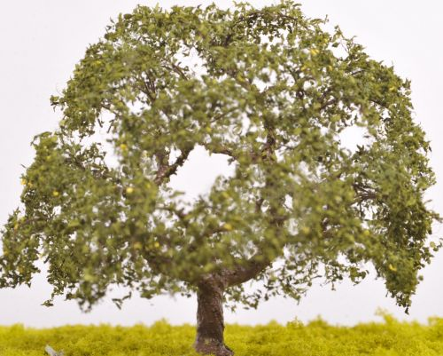 English Oak Tree - (Click picture for options)