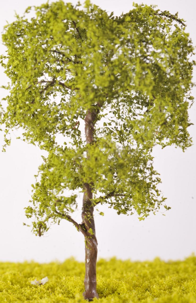 Beech Tree Tw10 The Model Tree Shop